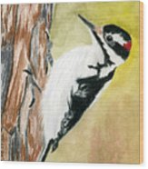 Harry The Hairy Woodpecker Wood Print
