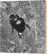 Harsh Life Black White Life Is Dung Beetle Card Wood Print