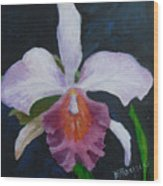 Hartford Orchid Wood Print