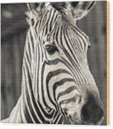 Hartmann's Mountain Zebra 2 Wood Print