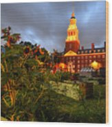 Harvard Community Garden Cambridge Ma Wood Print