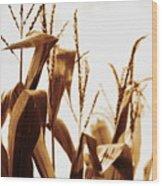 Harvest Corn Stalks - Gold Wood Print