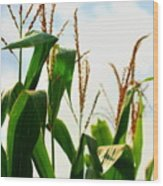 Harvest Corn Stalks Wood Print