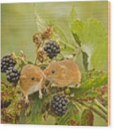 Harvest Mice On Blackberry Wood Print