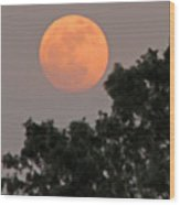 Harvest Moonrise Wood Print