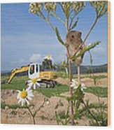Harvest Mouse And Backhoe Wood Print