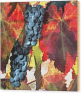 Harvest Time Grapes And Leaves Wood Print