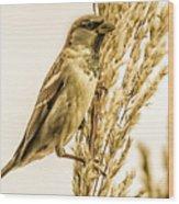 Harvest Time Iv Wood Print
