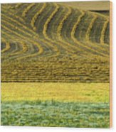 Harvested Fields Of The Palouse Wood Print
