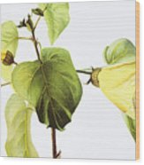 Hau Plant Art Wood Print