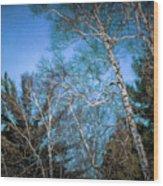 Haunted Trees Wood Print