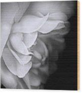 Haunting Beauty Monochrome Rose Wood Print