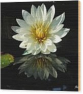 Haven Hospice Water Lily Wood Print