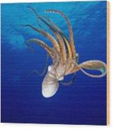 Hawaii, Day Octopus Wood Print
