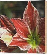 Hawaii Flora 11 Wood Print