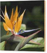 Hawaii Flora 13 Wood Print