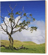 Hawaii Koa Tree Wood Print