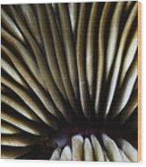 Hawaii Mushroom Coral Wood Print