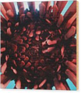 Hawaii Pencil Urchin Wood Print