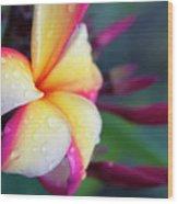 Hawaii Plumeria Flower Jewels Wood Print