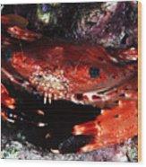Hawaii Swimming Crab Wood Print