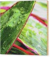 Hawaii Ti Leaves Morning Shower 559 Wood Print