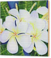 Hawaii Tropical Plumeria Flower  #208 Wood Print