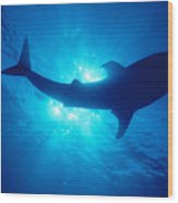 Hawaii, Whale Shark Wood Print