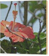 Hawaiian Beauty Wood Print