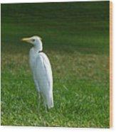 Hawaiian Cattle Egret Wood Print