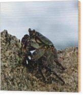 Hawaiian Crab Legs Wood Print