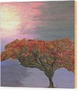Hawaiian Flame Tree Wood Print