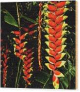 Hawaiian Heliconia Wood Print