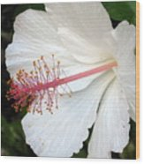 Hawaiian Hibiscus 2 Photograph Wood Print