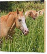 Hawaiian Horses In Sugar Cane Wood Print