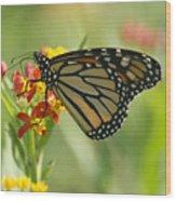 Hawaiian Monarch 1 Wood Print