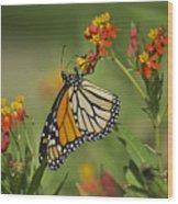 Hawaiian Monarch 2 Wood Print