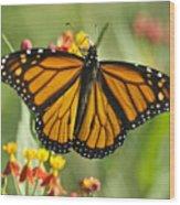 Hawaiian Monarch 3 Wood Print