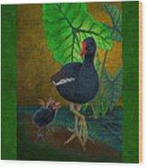 Hawaiian Moorhen Or Gallinule Wood Print