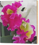 Hawaiian Orchid 10 Wood Print