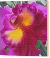 Hawaiian Orchid 2 Wood Print
