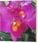 Hawaiian Orchid 3 Wood Print