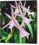 Hawaiian Orchid 31 Wood Print