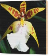 Hawaiian Orchid 32 Wood Print