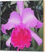 Hawaiian Orchid 33 Wood Print
