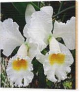 Hawaiian Orchid 35 Wood Print