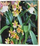 Hawaiian Orchid 36 Wood Print