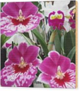 Hawaiian Orchid 5 Wood Print