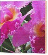 Hawaiian Orchid 6 Wood Print