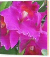 Hawaiian Orchid 8 Wood Print